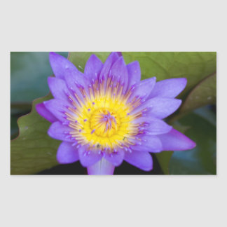 Customize Brilliant Blue Water Lily Bloom photo