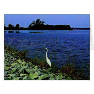 Customize This Vibrant Blue Lake White Egret Bird Card