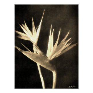 Cut Bird of Paradise Flowers 2 Antiqued Poster