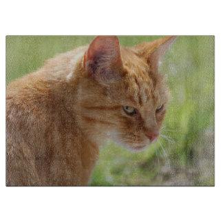 Cut board cat - photo by Jean Louis Glineur