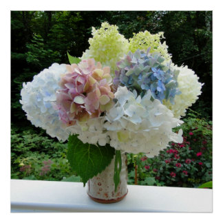 Cut Hydrangea Flowers in a Vase Photography Poster