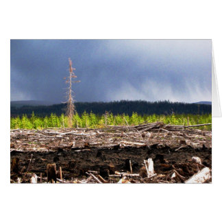 Cutblock storm card