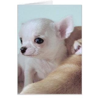 Cute 4 week old chihuahua puppies greeting card