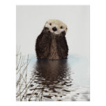 Cute adorable fluffy otter animal posters