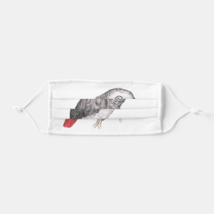 Cute African Grey Parrot Drawing