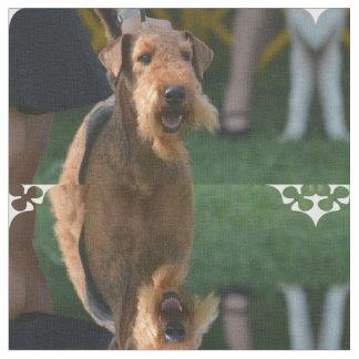 Cute Airedale Terrier