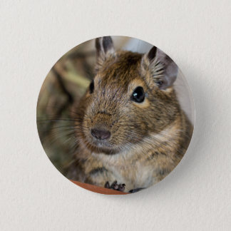 Cute Alert Degu Photograph 2 Inch Round Button