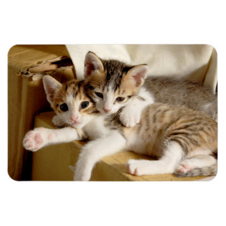 Cute and Cuddly Kitten Twins Relaxing Magnet
