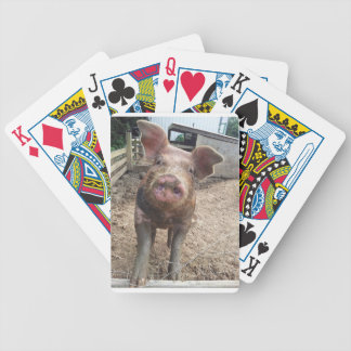 cute and funny muddy pig playing cards