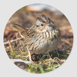 Cute and Spunky Lincoln's Sparrow Classic Round Sticker