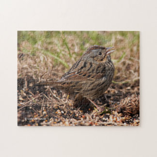 Cute and Spunky Lincoln's Sparrow Jigsaw Puzzle