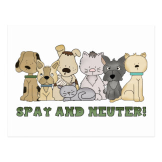 Cute Animals Spay and Neuter Text Post Card