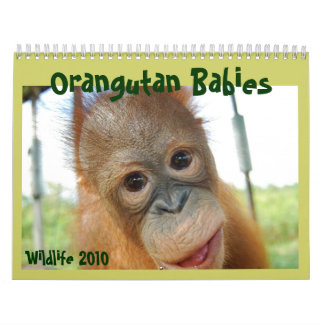 Cute Apes Wildlife Babies Calendar