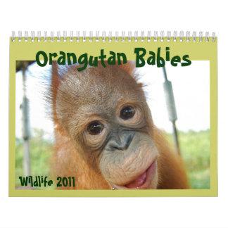 Cute Apes Wildlife Calendar