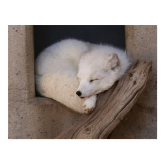 Cute Arctic Fox Sleeping Postcard