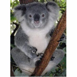 Cute Aussi Animal Koala Bear  Peace Love Destiny Photo Sculpture Keychain