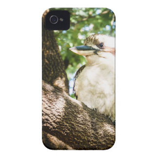 Cute Australia Kookaburra iPhone 4 Cover