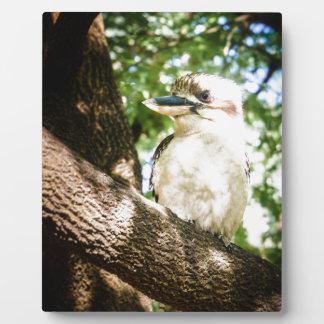 Cute Australia Kookaburra Plaque