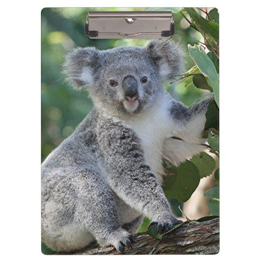 Cute Australian koala in a gumtree Clipboard