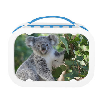 Cute Australian Koala lunchbox