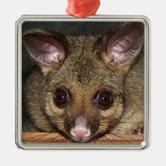 Cute Australian possum Silver-Colored Square Ornament