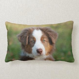 Cute Australian Shepherd puppy Lumbar Pillow