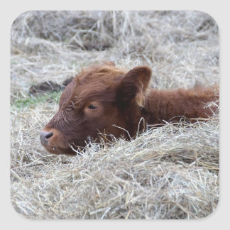 Cute Baby Calf, Farmyard Animal Craft Stickers