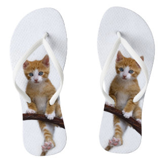 Cute Baby Cat Kitten Funny Gym Photo on - Flip Flops