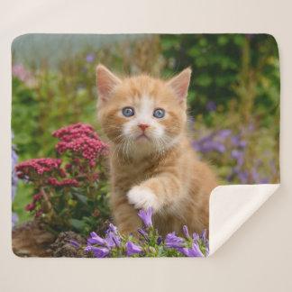 Cute Baby Cat Kitten Playing Animal Photo Head -- Sherpa Blanket