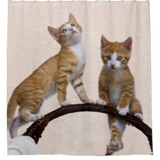 Cute Baby Cats Kittens Funny Play Gym Photo - Tub