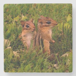 Cute Baby Chipmunks Animal Art Stone Coaster