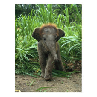 Cute Baby Elephant Postcard