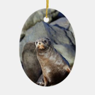 Cute baby fur seal Cape Palliser Ceramic Ornament