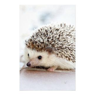Cute Baby Hedgehog Animal Stationery