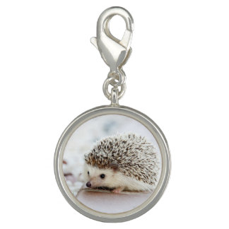 Cute Baby Hedgehog Photo Charm