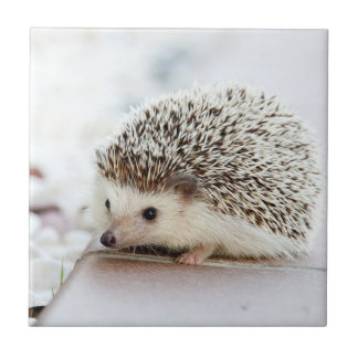 Cute Baby Hedgehog Tile