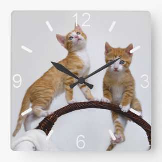 Cute Baby Kitten Funny Play Gym Photo Cat Lover - Square Wall Clock