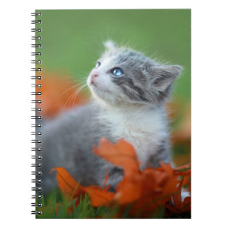 Cute Baby Kittens Playing Outdoors in the Grass Spiral Notebook