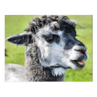 Cute Baby Llama Postcard