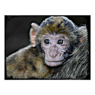 Cute Baby Monkey Face Poster