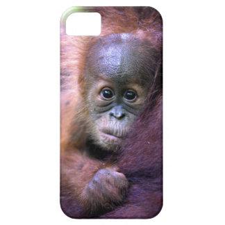 Cute baby orangutan in Sumatra iPhone 5 Cases