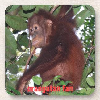 Cute Baby Orangutan in Tanjung Puting Drink Coaster
