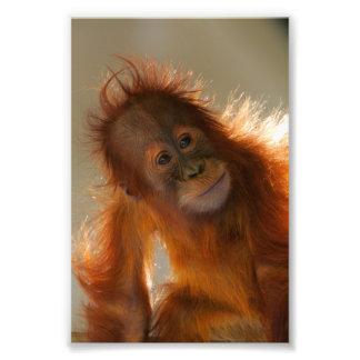 Cute Baby Orangutan Photographic Print