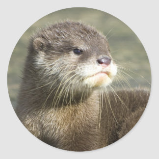 Cute Baby Otter Classic Round Sticker