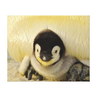 Cute Baby Penguin Canvas Print