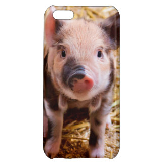 Cute Baby Piglet Farm Animals Babies Case For iPhone 5C