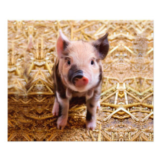 Cute Baby Piglet Farm Animals Babies Photo