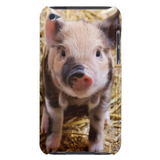 Cute Baby Piglet Farm Animals Barnyard Babies Barely There iPod Cases