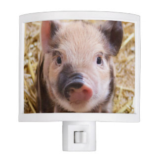 Cute Baby Piglet Night Light - Farm Animal Babies