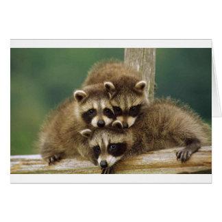 Cute Baby Raccoon Card
